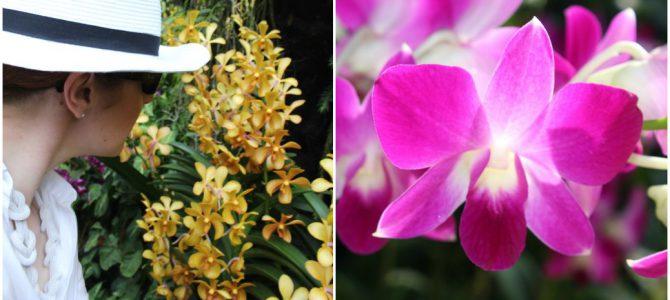 Farbenfroh: Botanischer Garten, Singapur