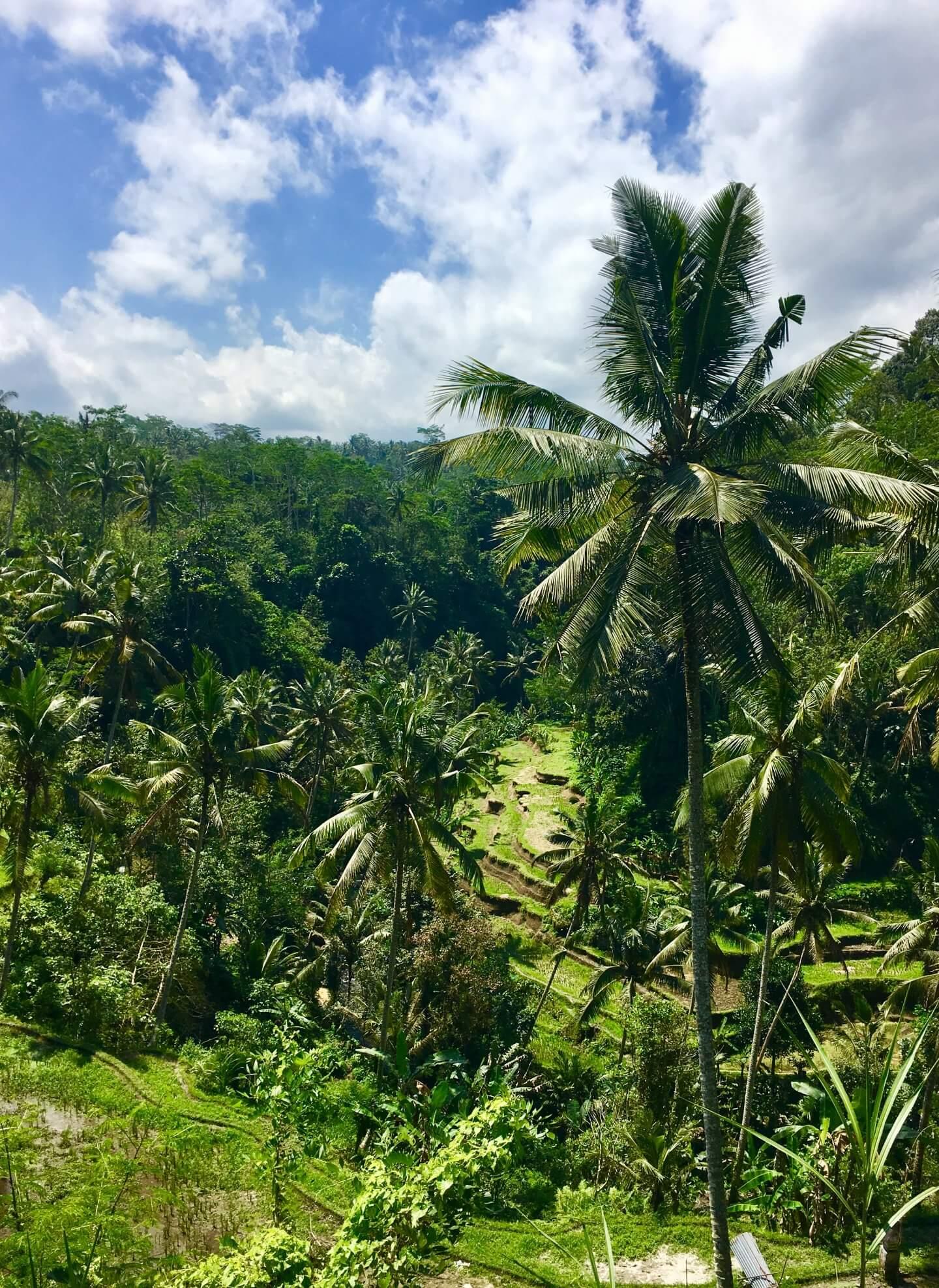 Bali Indonesien Reisen Ruhe Erholung Brexit Sturm IKNMLO