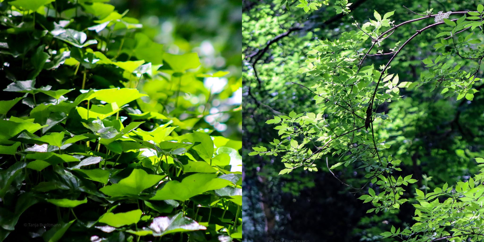 Wald Grün Farben Ruhe wandeln Fluchtort entspannen
